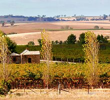 The Barossa Valley by jwwallace