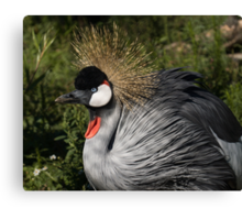 Portrait of an African Grey Crowned Crane Canvas Print