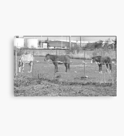Urban Horses Canvas Print