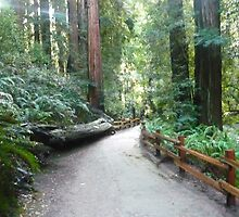 Muir Woods by shenae2