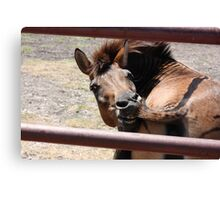 Ooo I have an itch! Canvas Print