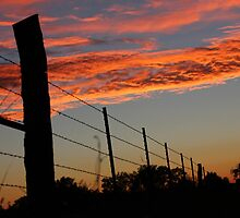 Sunset Fenceline by AbigailJoy