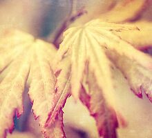 Japanese Maple Leaves with Texture Effect by Natalie Kinnear