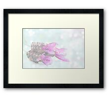 Soft dreamy lavender Framed Print