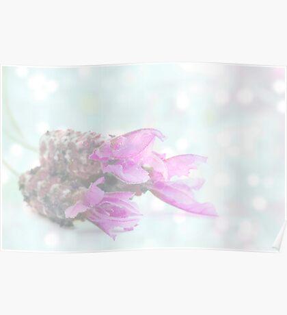 Soft dreamy lavender Poster