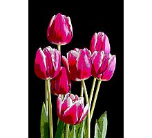 Bunch of pink tulips Photographic Print