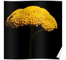 Floral Extravaganza ~ Part Six Poster