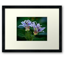 Toad Lily in Autumn Framed Print