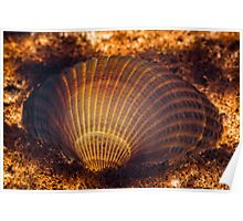 Clamshell Poster