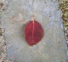 autumn 9 by arteology