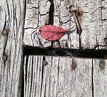 autumn 13 by arteology