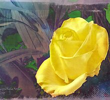Rosa del Amarillo by Amar-Images