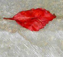 autumn 22 by arteology