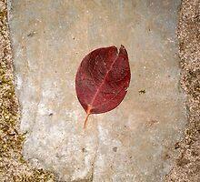 autumn 25 by arteology