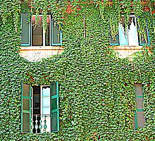 Creeper on a building by orsinico