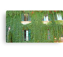 Creeper on a building Canvas Print
