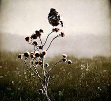 Carpe Diem... by Karen  Helgesen