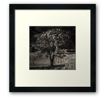 Tree Near Milwaukee Road Framed Print