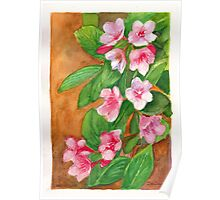 Watercolour painting of weigela flowers Poster
