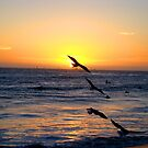 sunset 7 seagulls by Tim Horton