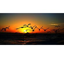sunset and seaguls Photographic Print