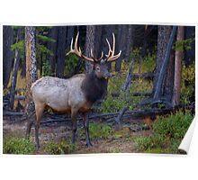 Damp Elk Poster