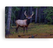 Regal Elk Canvas Print