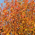Autumn Leaves by Sharon Brown