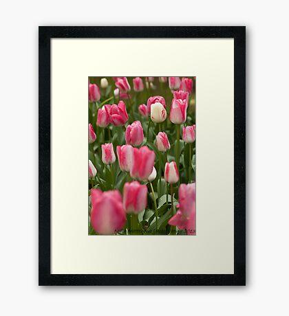 Tulips ........ Framed Print