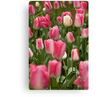 Tulips ........ Canvas Print