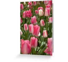 Tulips ........ Greeting Card