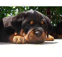Cute Close Up Of A Sleepy Rottweiler Puppy Photographic Print