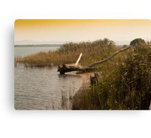 Driftwood On A Reedy Shore. Canvas Print