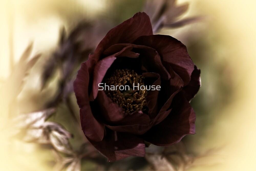 Velvet Dreams .... by Sharon House