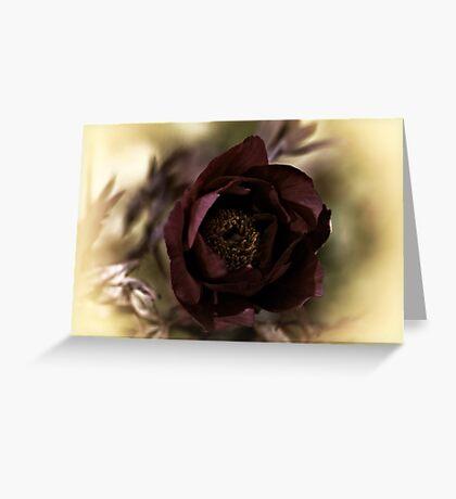 Velvet Dreams .... Greeting Card