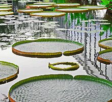 Water Lillies by GivenToArt
