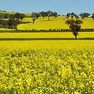 Canola Fields On The Road To Stockinbingal NSW Australia by Bev Woodman