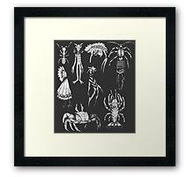 Various sketches no.1 Framed Print