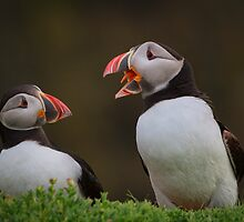 Puffins Chatting by TimKing