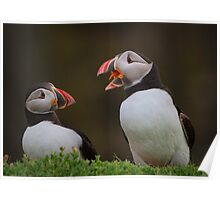 Puffins Chatting Poster