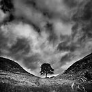 Along the Wall (Sycamore Gap) by Rory Garforth