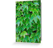 Amalfi Green Greeting Card