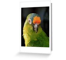 Peachfront Conure Greeting Card