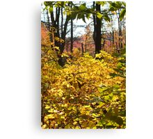 Noanet Woodlands Fall Foliage Canvas Print