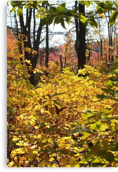 Noanet Woodlands Fall Foliage by CapeCodGiftShop