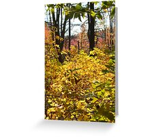 Noanet Woodlands Fall Foliage Greeting Card
