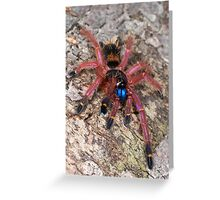 Blue Fang Tarantula Spiderling Greeting Card