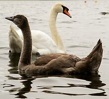 The Ugly Duckling by dulciemaephotos