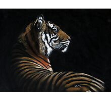 Tiger on Black Photographic Print