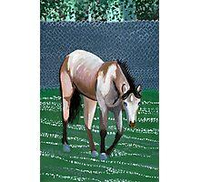Buckskin Quarter Horse Portrait Photographic Print